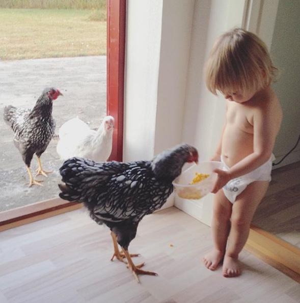 Billeder af massive haner